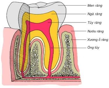 nguyên nhân sâu răng 4